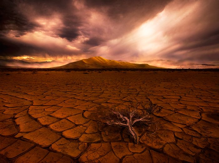 A Psalm For TheDrought